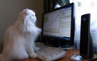 Трейдинг на фондовом рынке — базовый курс