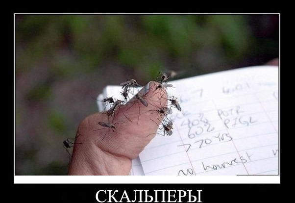 TNG scalping new XXX скачать советник