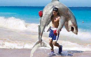 Торговая система акула FX скачать бесплатно