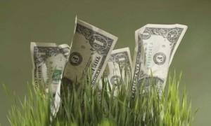 стабильный памм фонд пантеон финанс