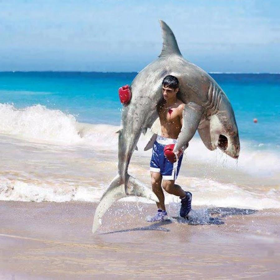 Торговая система акула fx