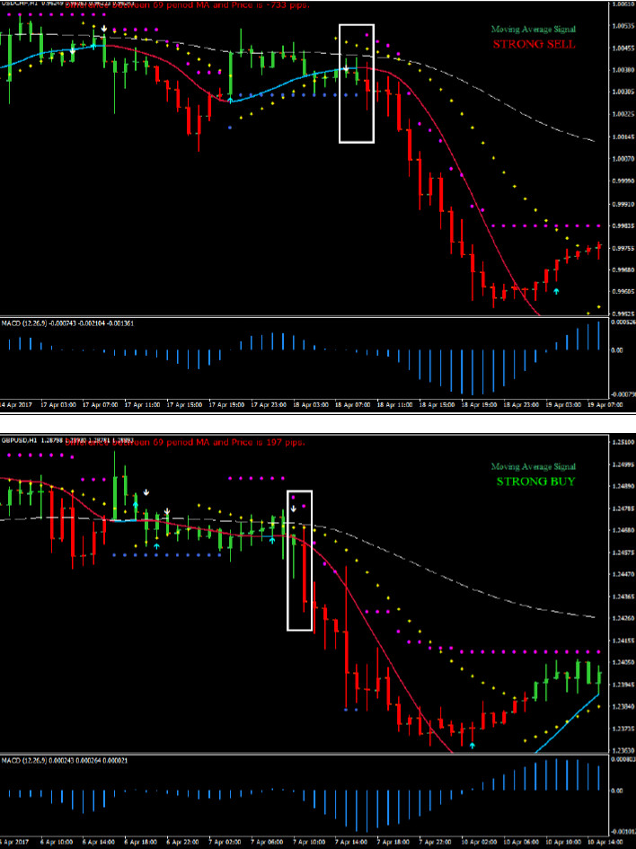 Golden turtle forex trading system